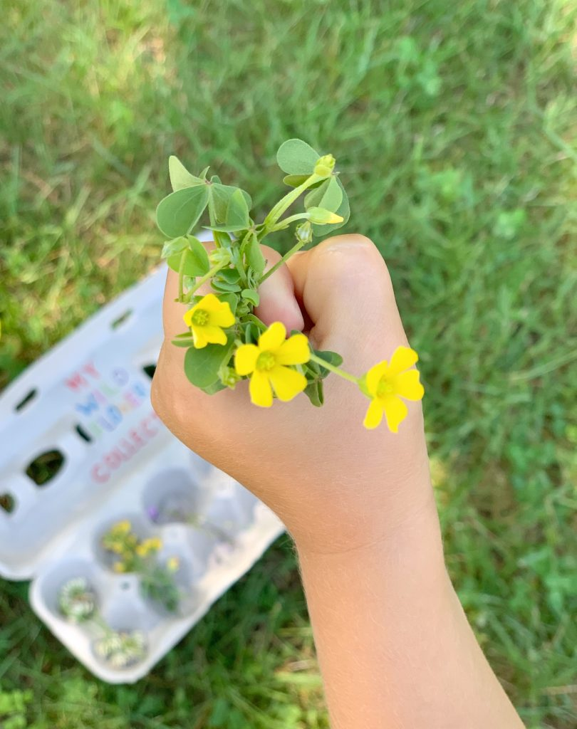 wildflower hunt- toddler at play (1)