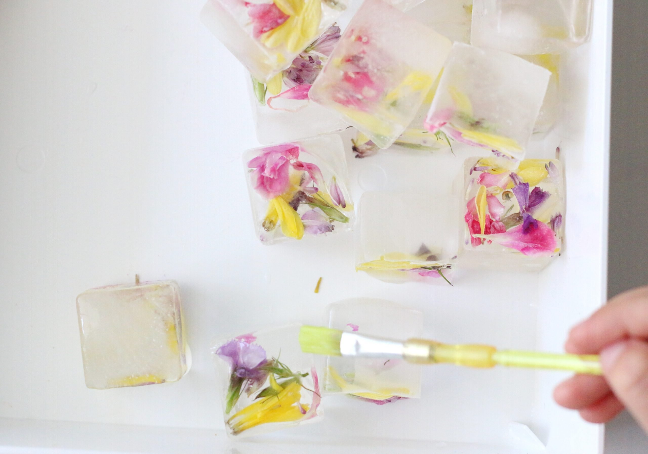 Water Painting Flower Ice Cubes