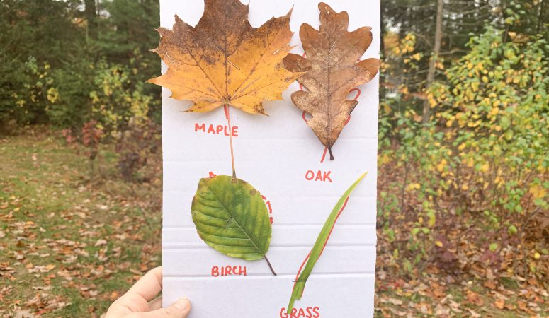 Leaf Scavenger Hunt